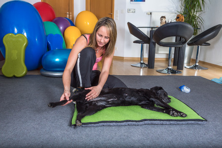 woman therapist working with dog Stockfoto
