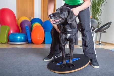 dog balancing while treatment