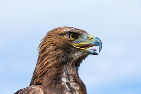 catchlight: portrait of a eagle close up