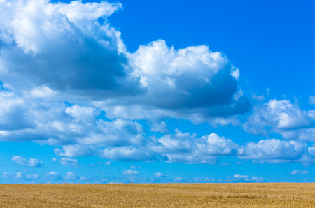 harvested: harvested wheat field and beautiful clouds