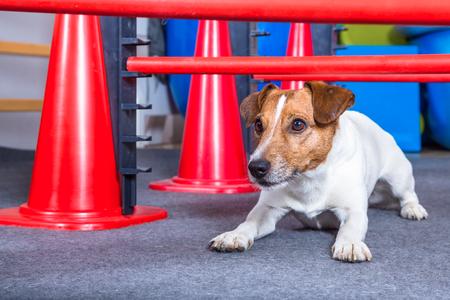 jack russel terrier kutya terápia Stock fotó