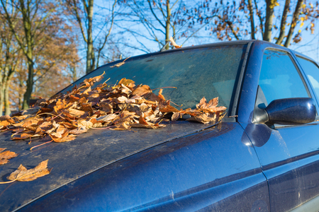 windscreen: windscreen of a car full of autumn leaves