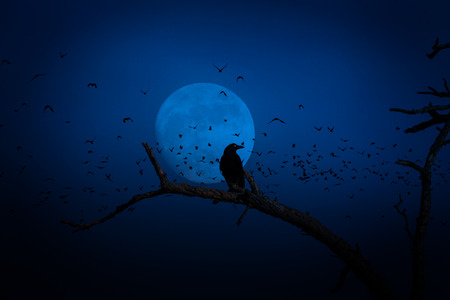 nightmarish: crow sits on a branch on full moon with swarm of birds Stock Photo