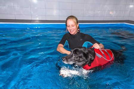 therapeutical: Therapist with dog in swimming pool