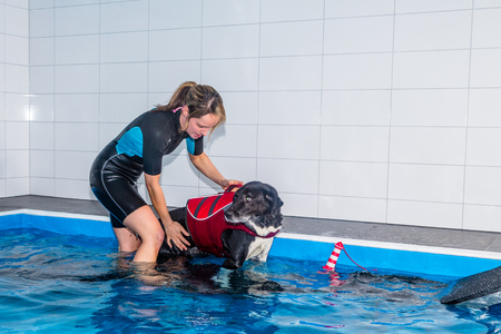 guides: Therapist guides dog out of swimming pool