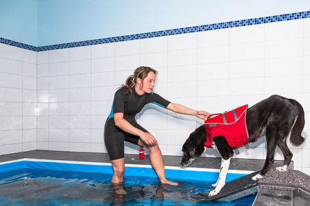 therapeutical: Therapist guides dog into swimming pool