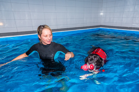 therapeutical: dog and woman inside a pool practising swim therapy