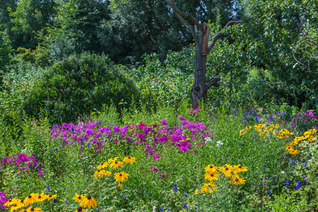 wild garden with colorful flowers Stock Photo