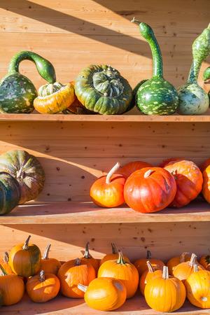 vitamines: colorful pumpkins on a display