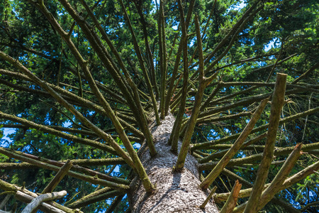 many branches: big tree trunk with many branches Stock Photo