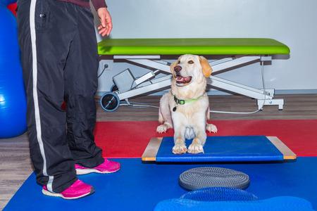 obediencia: ejercicio de la obediencia en la oficina de los veterinarios Foto de archivo