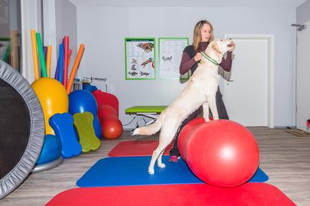 Hund und Therapeuten zusammen, während Stretching Standard-Bild - 67023487