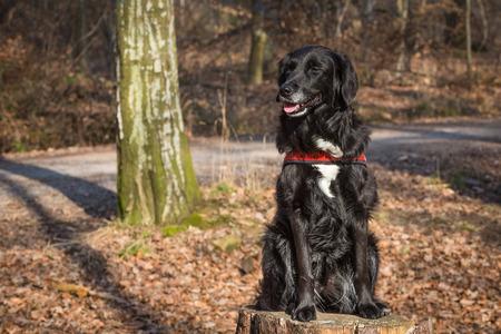 portait: half breed sits on tree trunk Stock Photo