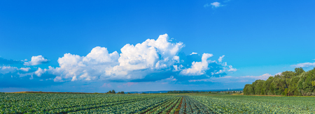 cabbage fields on a sunny day