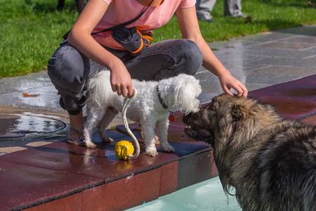 két különböző méretű kutya találkozása