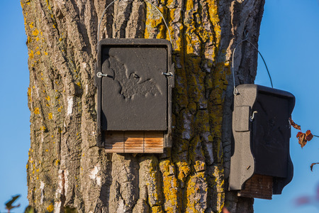 bat house for shelter on a tree Stock fotó