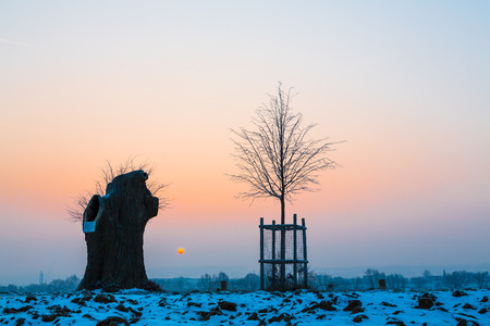 colorful old and young tree at sunrise in wintertime Stock Photo