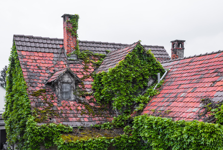 overgrown roof of a old house