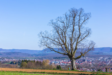 old tree and view to the city Nuertingen at the suabian alb Stock Photo