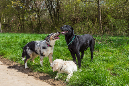group behaviour of dogs in a pack outdoors