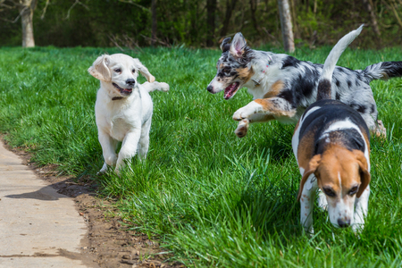young dogs playing together on a meadow
