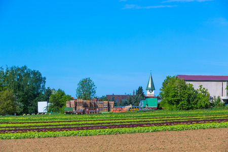 rural scene with salad field and church tower in the background Stock fotó