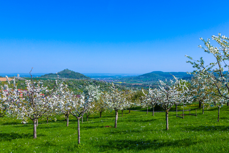cherry orchard and vulcan Limburg at the suabien alb Stock fotó