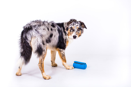 playful whelp with food bag on white background