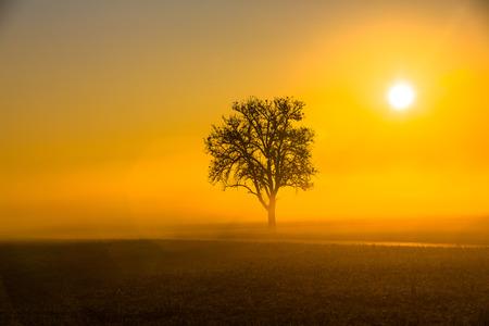 orange sunrise with tree in autumn