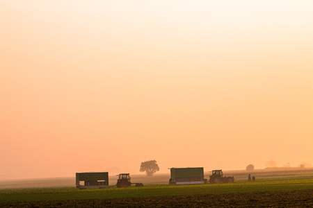 agriculture on a foggy autumn morning with tractors and trees Standard-Bild - 116771284