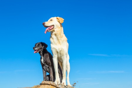 tow dogs enjoy the view on a sunny day