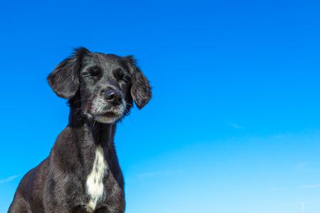 dog enjoys the sun with closed eyes Stock fotó