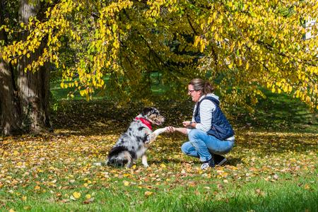 education of a young australian shepherd dog