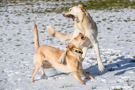two dogs playing in the snow and haveing fund