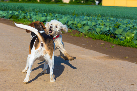two dogs meeting and playing on a walk