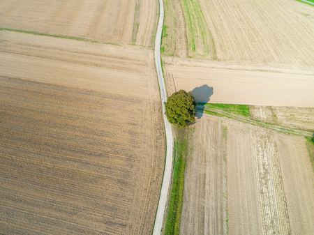 aerial view of a single tree and road between brown empty fields