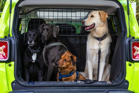 four dogs sitting in a trunk of a car