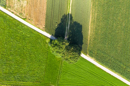 aerial of two oak trees seen from above with a bike path crossing the picture