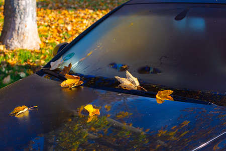 Colorful leaves on a car windshield in autumn Stock Photo