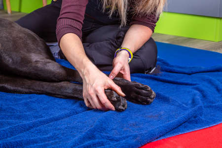 paws of a dog get massage by a therapist
