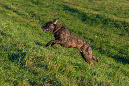 profile of a dog running through a green meadow