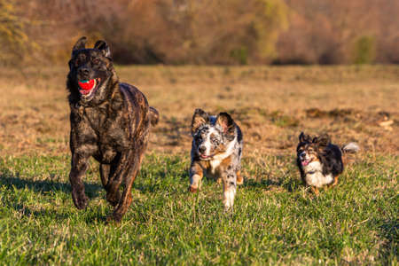three dogs playing with a ball outdoors and haveing fun