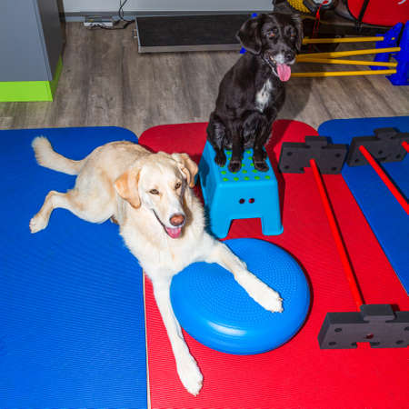 two dogs waiting in office for treatment in physical therapy