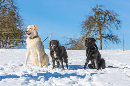 three dogs waiting in winter landscape on a sunny day Stock fotó