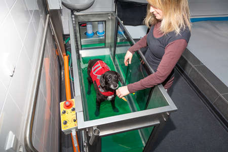 therapist gives a treatment to a dog in a underwater treadmill Stock fotó