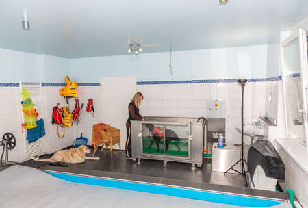 hydrotherapy for sick dogs in an underwater treadmill Stock fotó
