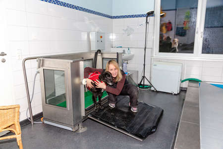 therapist guides dog out of a water treadmill after treatment Stock fotó