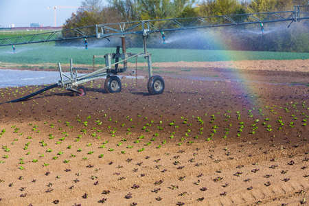 artificial watering in the summer on the field