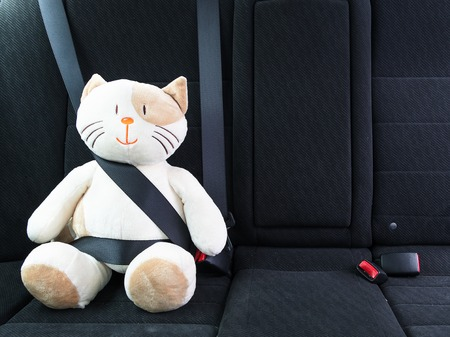 Plush toy cat fastened with seatbelt in the back seat of a car, safety on the road. Protection concept. Standard-Bild
