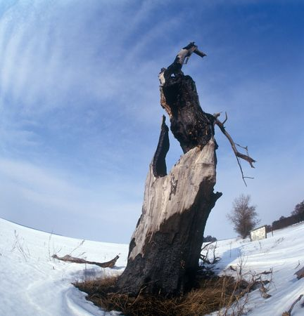 burned out: The tree burned out by lightning. Winter. Chernigiv region, Ukraine. Stock Photo